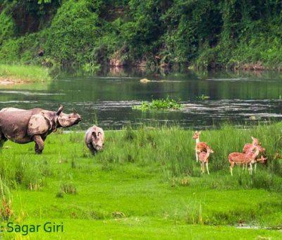 पातला पर्यटक बाक्लै वन्यजन्तु